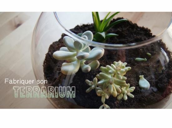 terrariumbase